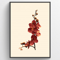 Orchid - poster