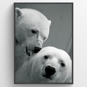 Polar bear couple - poster väggdekor