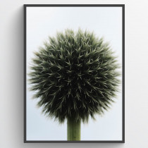 Ball plant - poster