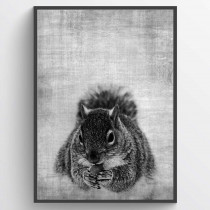 Texture squirrel poster
