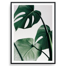 Monstera växt - poster