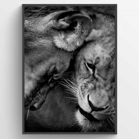 Lion couple - poster väggdekor